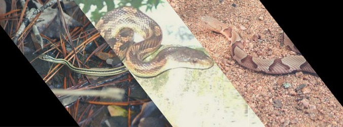 Snakes Collage