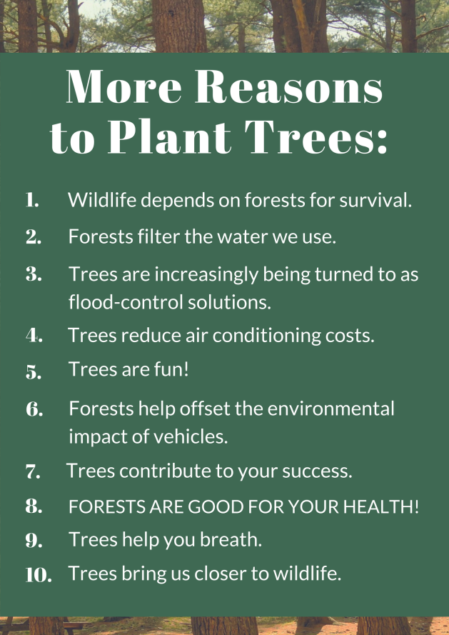 more-reasons-to-plant-trees