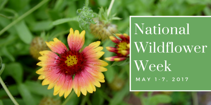 National Wildflower Week (1).png