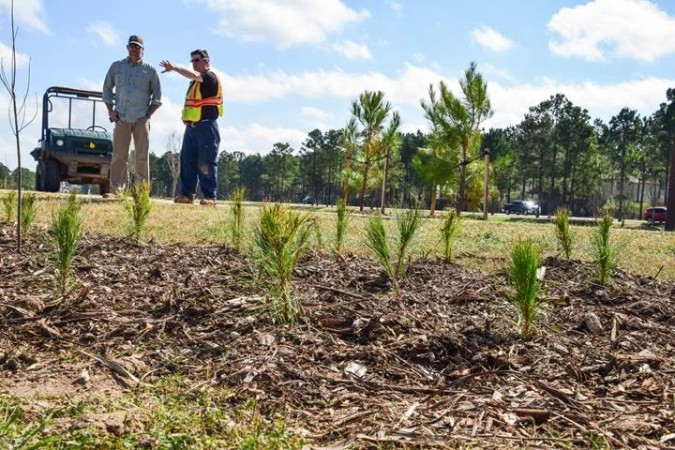 villlage tree planting
