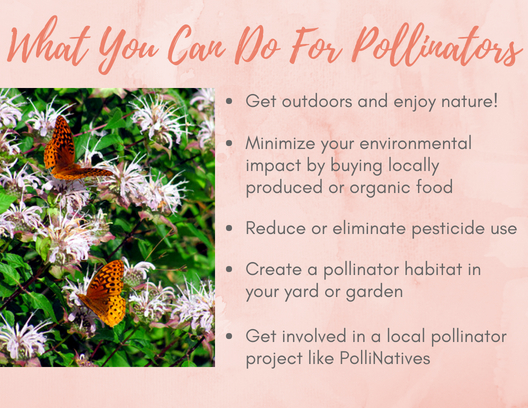 What You Can Do For Pollinators