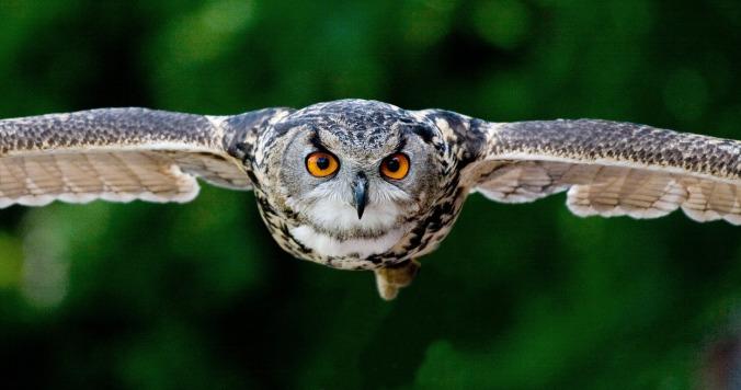 owl-2106651_1920