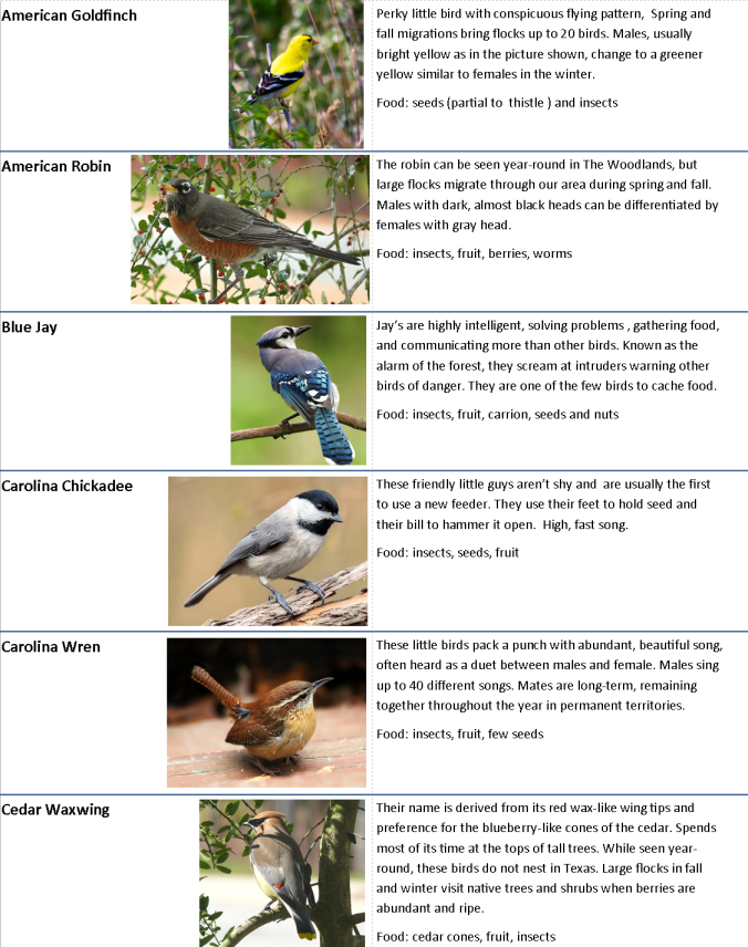 Backyard Bird chart.page 1