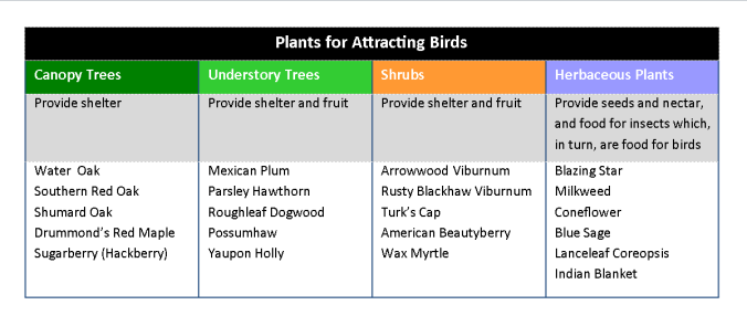Plants for Birds Chart