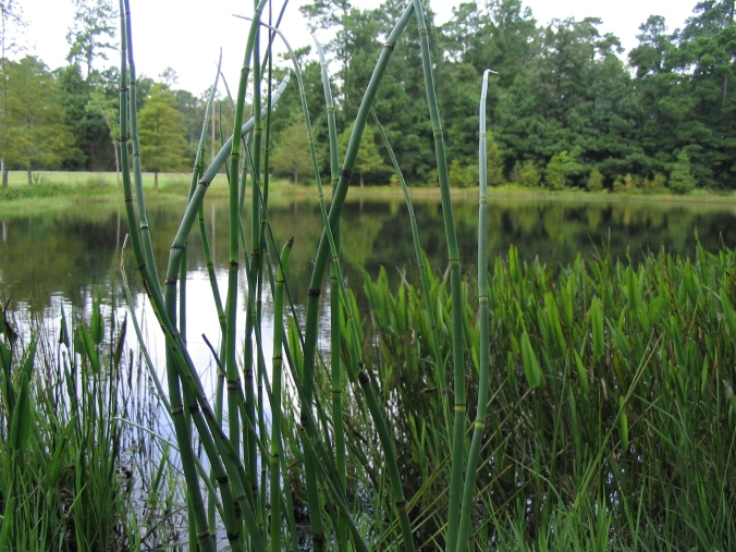 Pond-LVphoto