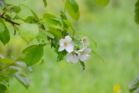 apple-tree-3491025_1920
