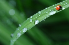 ladybug-574971_1920
