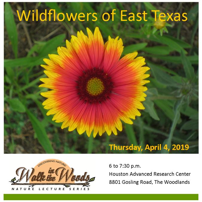 ES_3.28_WITW Wildflowers